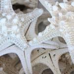 """""""White Starfish"""" by Groecar"""