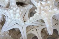 White Starfish by Carol Groenen