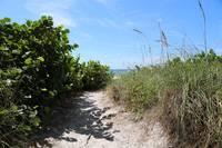 Winding Path to the Beach by Carol Groenen