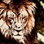 """LION-PANTHERA LEO"" by thegriffinpassant"