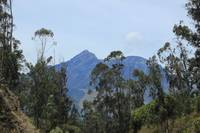 Mount Cotacachi Through Trees