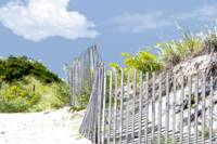 Beach Fence and Dune