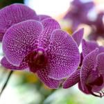 """Striking Orchid"" by Groecar"