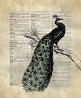 Vintage_DictionaryArt_Peacock