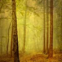 fairytale path Art Prints & Posters by Iris Lehnhardt