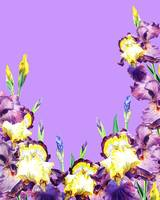 Purple Iris Flowers Lilac Sky