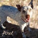"""""""Pixel"""" by derekalvarez"""