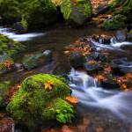 """""""Autumn Leaves Scattered"""" by Dawsonimages"""
