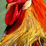 """Rooster 1"" by artbyjames"