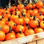 """Mini Pumpkins inside crate"" by globetrotter1"