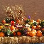 """""""Fall Display"""" by globetrotter1"""
