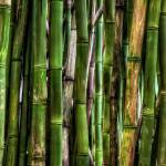 """Bamboo Forest"" by RHMiller"
