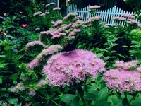 Beautiful Pink Flowering Shrubs