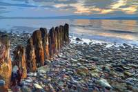 Worn Pilings on Rocky Shoreline