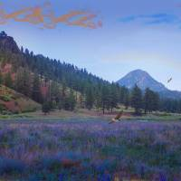 The Lavender Field Art Prints & Posters by J. Griff Griffin