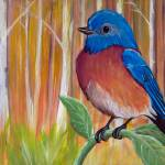 """Eastern Bluebird in Autumn"" by Littlepig"