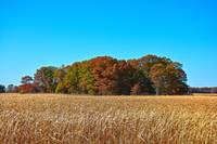 Autumn Island in an Ocean of Tall Grasses
