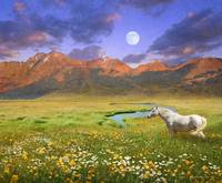 wide world of abundance, wild horse