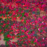 """Wall of Fall"" by robertmeyerslussier"