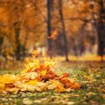 """leaves burning"" by Alekcej"