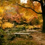 """Autumn Respite"" by JessicaJenney"