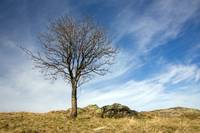 Beautiful leafless tree on the hill in autumn