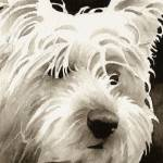 """West Highland Terrier"" by k9artgallery"