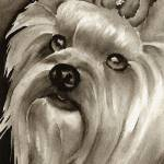 """Yorkshire Terrier"" by k9artgallery"
