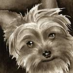 """Yorkshire Terrier Puppy"" by k9artgallery"