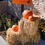 """Halloween Parking"" by robertmeyerslussier"