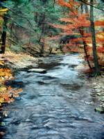 Colorful Autumn Leaves Beside Cool Blue Stream