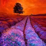 """""""Lavender fields"""" by boyan"""