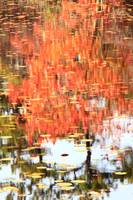 Lily Pond Autumn Water Reflections