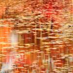 """Autumns color reflections on the Lily Pond"" by RoupenBaker"