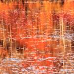 """""""Fall Landscape Reflections on the Lily Pond"""" by RoupenBaker"""