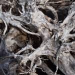 """""""A Maze of Driftwood"""" by memoriesoflove"""
