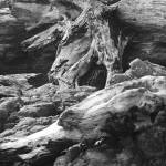 """""""Driftwood and Rocks in black and white"""" by memoriesoflove"""