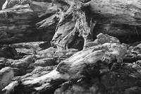 Driftwood and Rocks in black and white