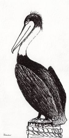 Pelican Paradise Portrait in Ink C2