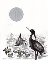 Crowned Night Heron Lily Pond Paradise in Ink D2