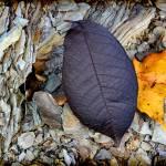 """Purple Leaf in Autumn"" by KsWorldArt"