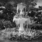 """Moss Fountain with Bromeliads - Black and White"" by Groecar"