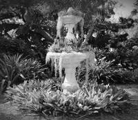 Moss Fountain with Bromeliads - Black and White