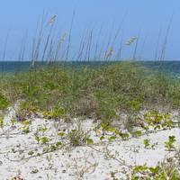 Beach Scene by Carol Groenen
