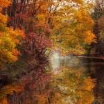"""""""November Reflections"""" by JessicaJenney"""