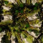 """""""TREELINES"""" by ecolosimo"""