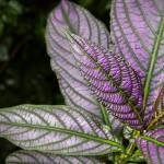 """Purple and Green Foliage"" by WilshireImages"