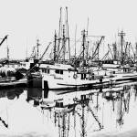 """Steveston Harbour"" by BillLinn"