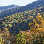 """Blue Ridge Parkway Peak Color"" by Dullinger"