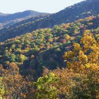 Blue Ridge Parkway Peak Color by Roger Dullinger